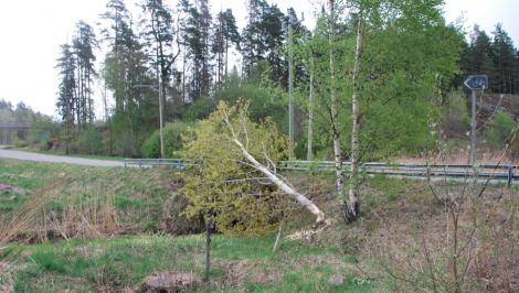 Det syns kanske inte, men trädet ligger över halva vägen.