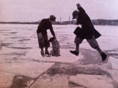 Jag kan inte se mig mätt. Jumpning på isflak är så absurt farligt – även när man inte har skridskor och hund.