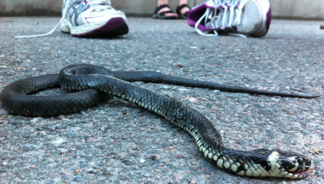 Vi hittade en nydöd snok som var varmare än vi trodde att ormar kunde vara.