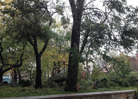 Union Squares trasiga träd.