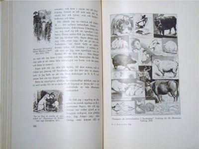 Så här ser ett uppslag i den gamla boken ut.