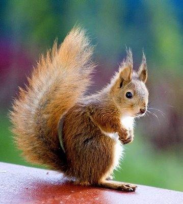 Men sjukgymnastikpersonalen säger att jag ser ut så här: