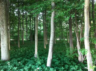Underbar skog som visade sig ha en helt annan bakgrund. Än som skog, alltså.