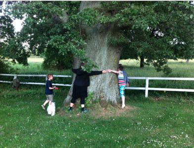 I Olseröd mätte vi ett träd. Vi tror att det var nästan 4,5 meter runtenom, vilket i kvadrat på hypotenusan upphöjt till tre ger en ålder av 375.