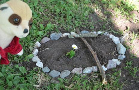 Shakespeare (mjukis-surikat som inköptes i Brighton) inspekterar och godkänner gravsmyckningen.