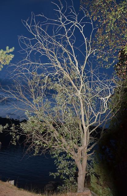 Trädet som vi alla tittade på.