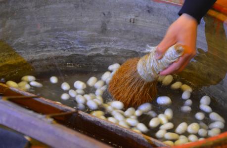 Ett gammalt sidentrick från Kina: man tar kokongerna, lägger dem i varmt vatten i 15 minuter, rör runt med en stickig borste och när man drar upp borsten är det bara att draaaa …