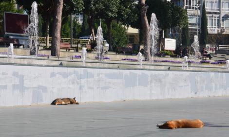 Det ser lite läskigt ut, men det är bara herrelösa hundar som sover down town Antalya.